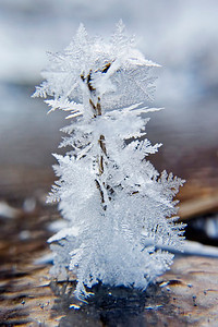 January 9 - Frost crystals growing on a blade of grass.