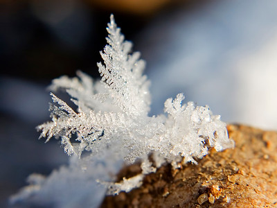 January 9 - Frost Crystals