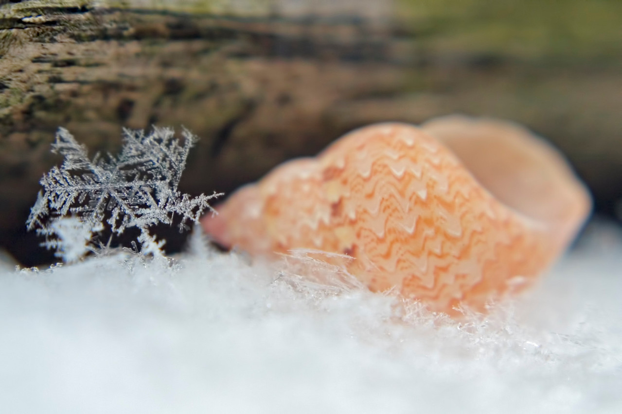January 13 - White Sandy Beaches!
