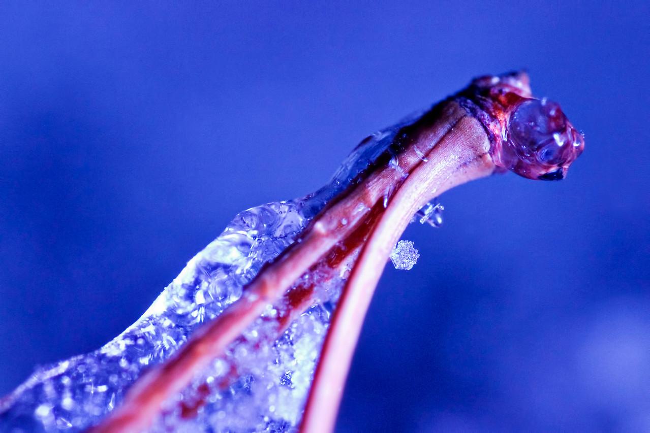 December 20 - Snowflake vs. Sleet vs. Pine Needle vs. Filtered Light