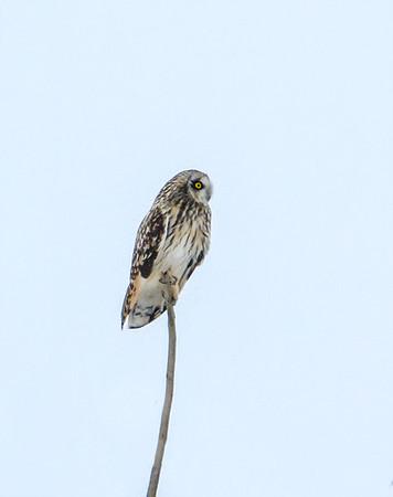 owl_4179