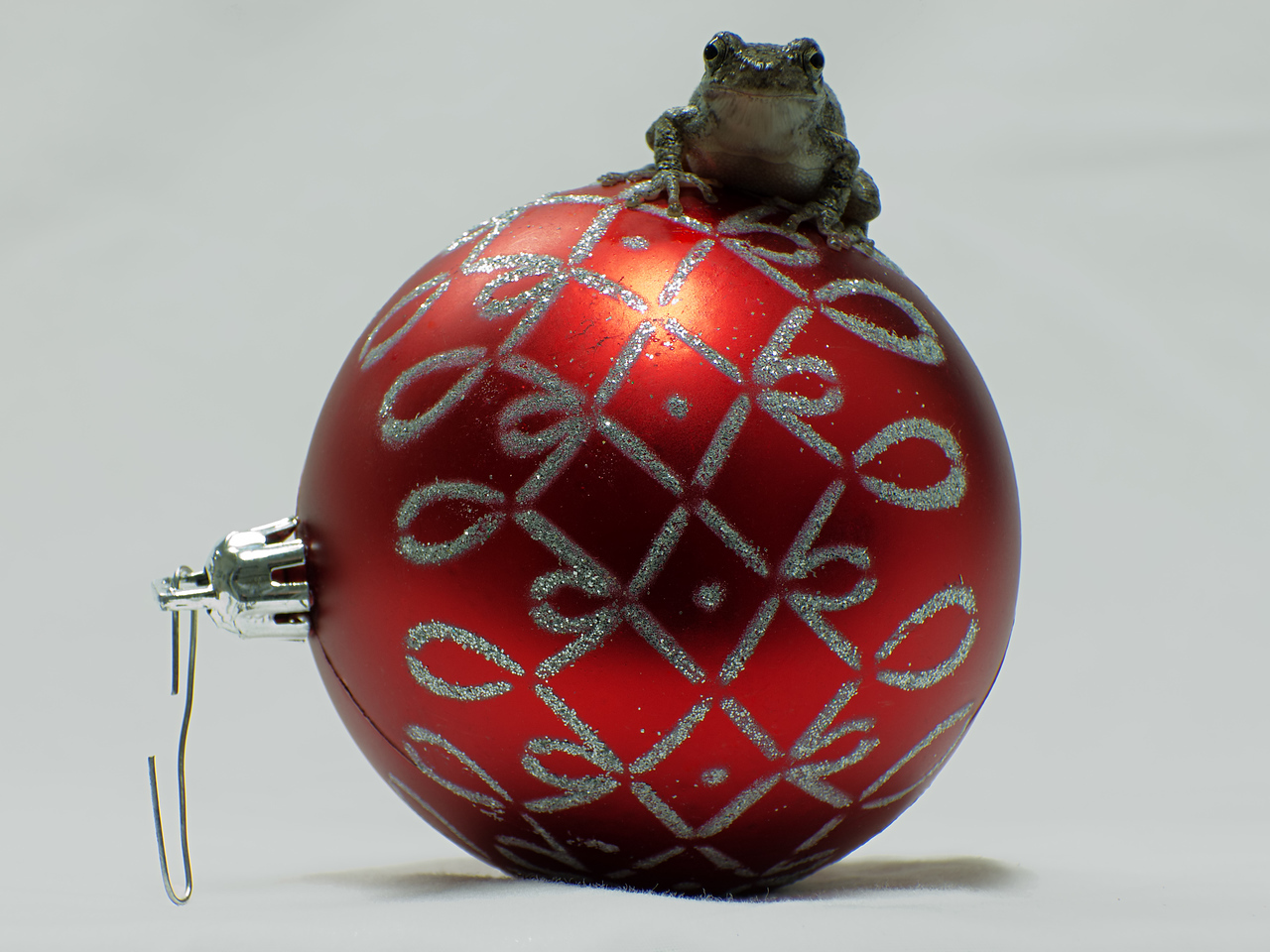 December 13, 2015 - Grey Tree Frog vs. Christmas Ball (might as well?)
