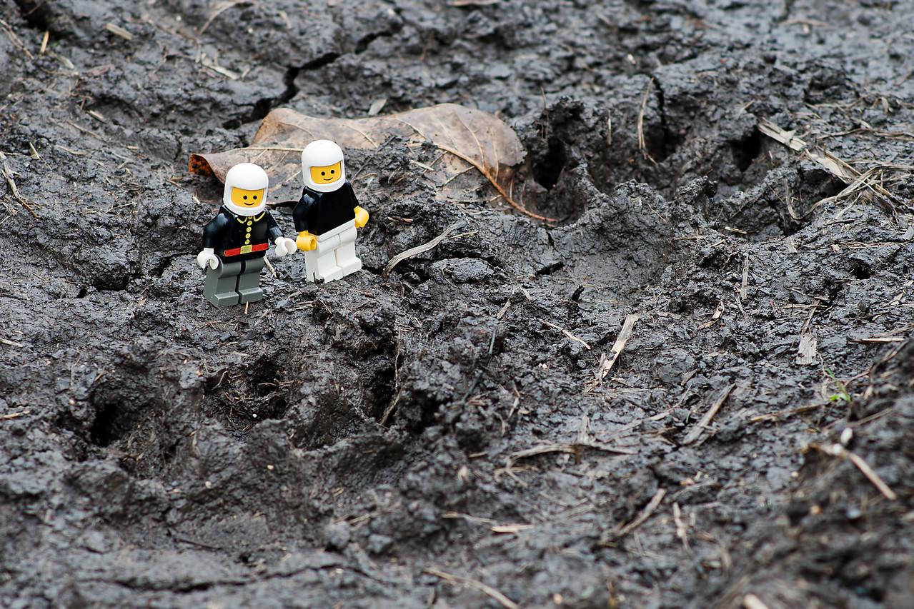 April 19, 2015 - Coywolf tracks, Calamus Lake