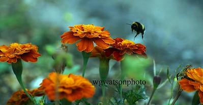 (c)  William G Watson Photography 2012