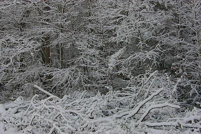 snowtreetwist
