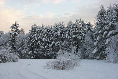 snowtreesky