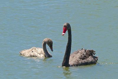 Nature Around Perth 2014