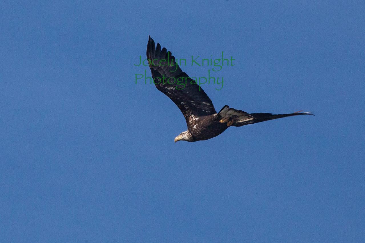 Eagle2816