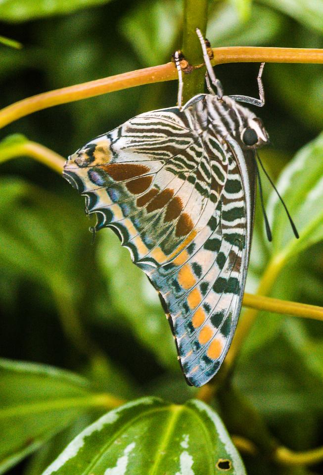 Butterflies in the Garden, Ft Worth, TX, 2014