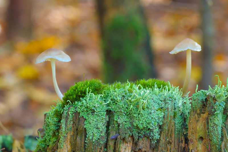 Mushrooms & Mosses