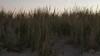 Early evening sand dune & ocean scenes, Bradley Beach, NJ (looking towards Ocean Grove)