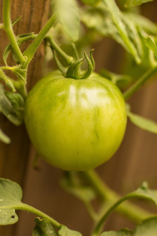 Green Tomatoes-3