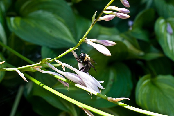 Bumble Bee (3 of 4)