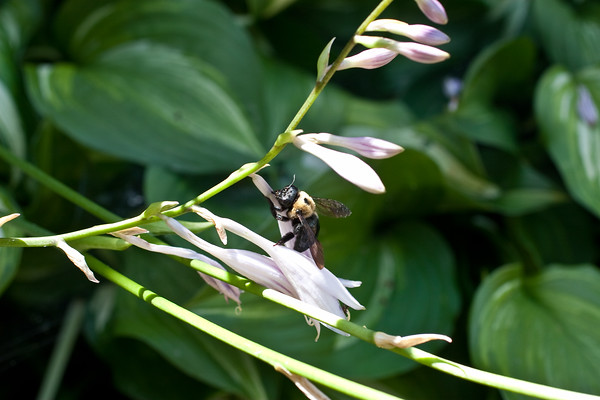 Bumble Bee (2 of 4)