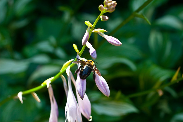 Bumble Bee (1 of 4)