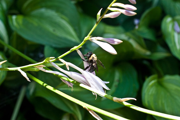 Bumble Bee (4 of 4)