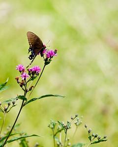Butterfly on Widlflowers