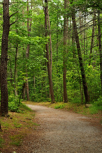 Forest trail in the Great Smokey Mountains National Park