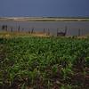 Dacha - Poliyova, Ukraine - storm over the corn