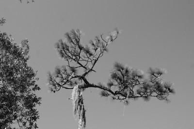 Nature Hike 11/22