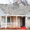 Globe/T. Rob Brown<br /> A flock of birds decides that this home near the intersection of 22nd Street and Wall Avenue is the place to be Wednesday afternoon, Jan. 30, 2013. Every other home in the neighborhood was bird free.