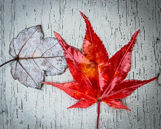 Fall Leaves 2019-14