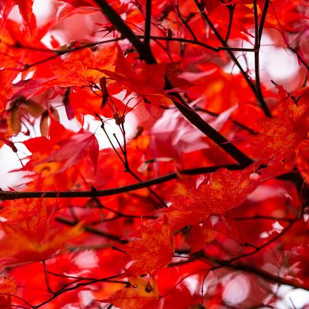 Fall Leaves 2019-51