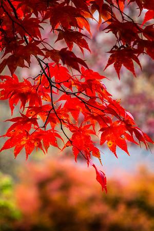 Fall Leaves 2019-62