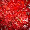 Fall Leaves 2019-57