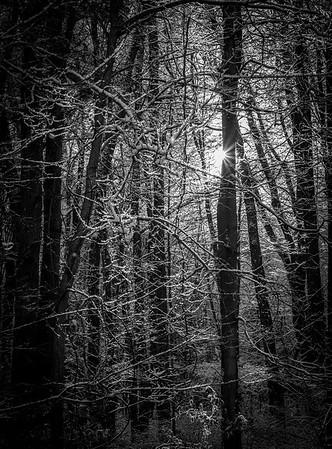 First Snow 2014-6