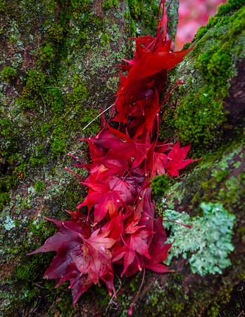 Fall Leaves 2019-11
