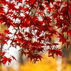 Fall Leaves 2019-59