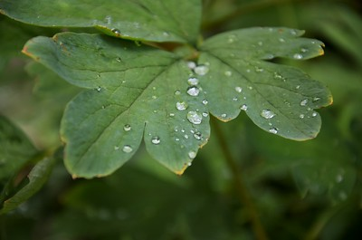 Rain drops on a Leaf.