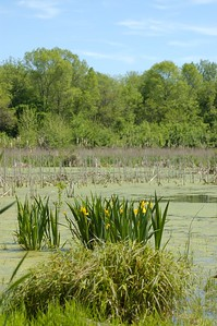 Northern Indiana wetlands