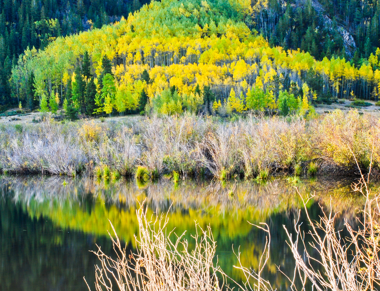some changing colors, October 2009, approximately 9000' above sea-level, (South)Park County, CO. I did not see Cartman. Yes, I looked for him
