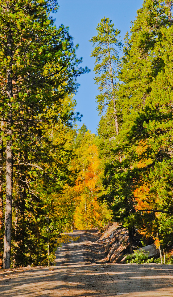 some changing colors, October 2009, approximately 9000' above sea-level, Park County, CO. I did not see Cartman. Yes, I looked for him.