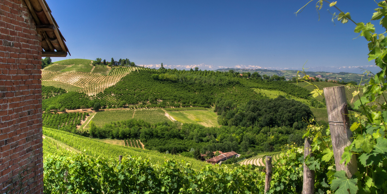 The tiny village of Barbaresco is to my back as I take this picture of Cru Barbaresco vineyards, with the Alps in the extreme distance. A remarkably (once per month?) clear day in the Langhe.