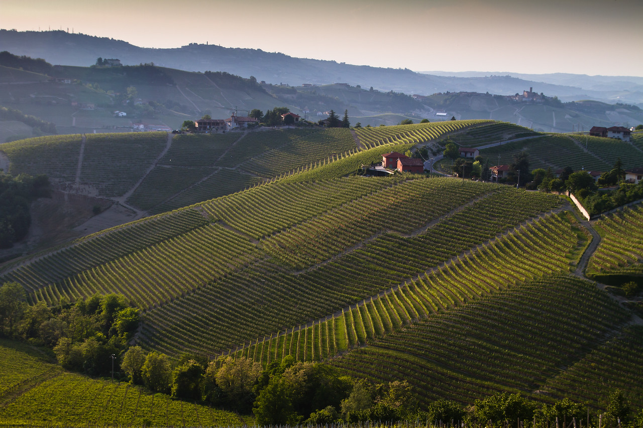 Not all Barolo vineyards are created equal - the rolling land gives some parcels more sunlight than others. Nebbiolo, the first grape to bud break in the spring, and the last to harvest; it needs all the sunlight/ripening it can get.
