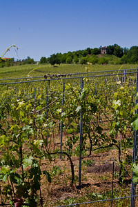 I'm standing in between some rows in Asti, specifically in  Rocchetta Tanaro, the vineyards of Braida. May 2011