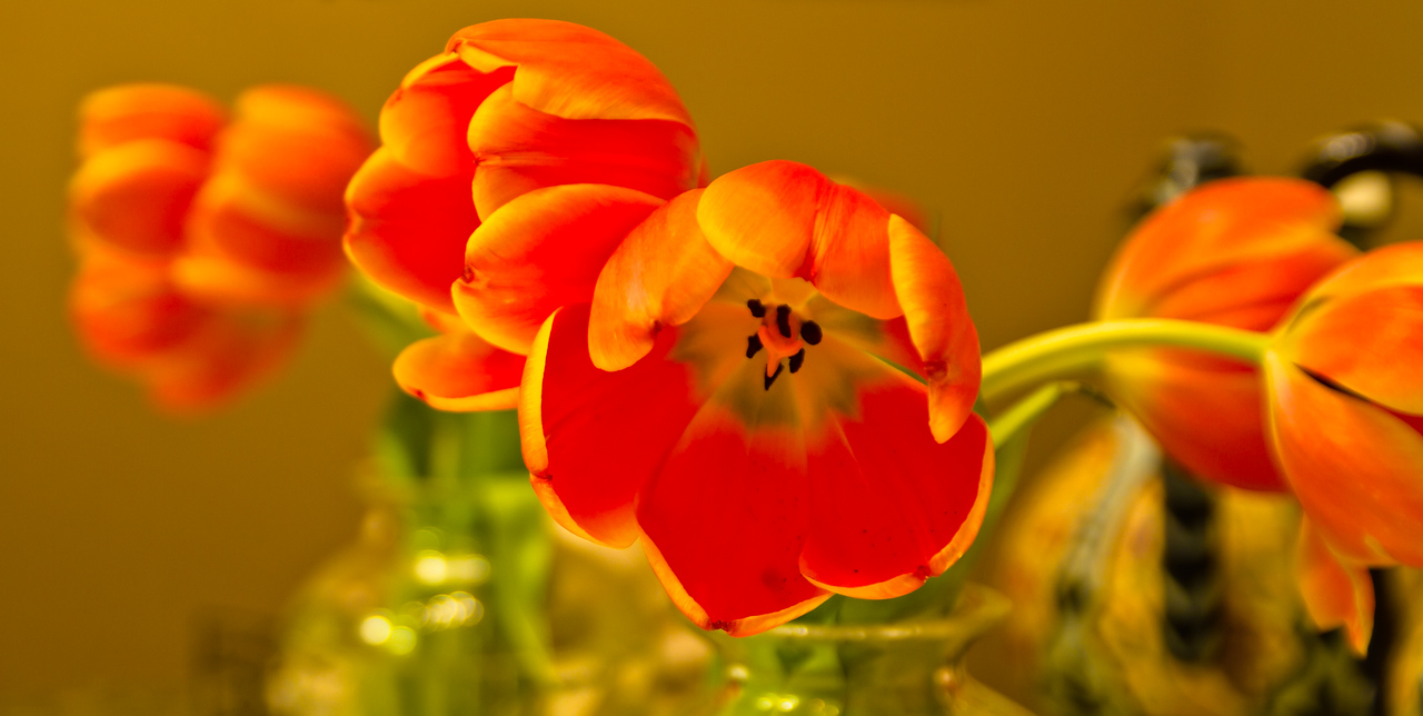 a simple handheld of some tulips we had in the house. I liked the colors and the reflection from the mirror in the background.