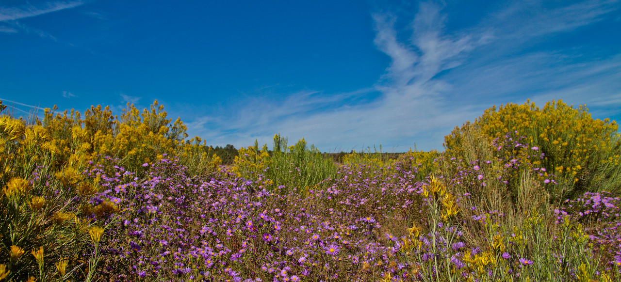 The drive from Taos to Denver (the back roads) is superb, especially in the early fall. I appreciated the wildflowers that lined the first 60 miles of the trip as I headed north on US 285. The highway is just a foot or so behind the wildflowers, I had to lay down to capture them and the sky as opposed to including the very unsightly roadway.