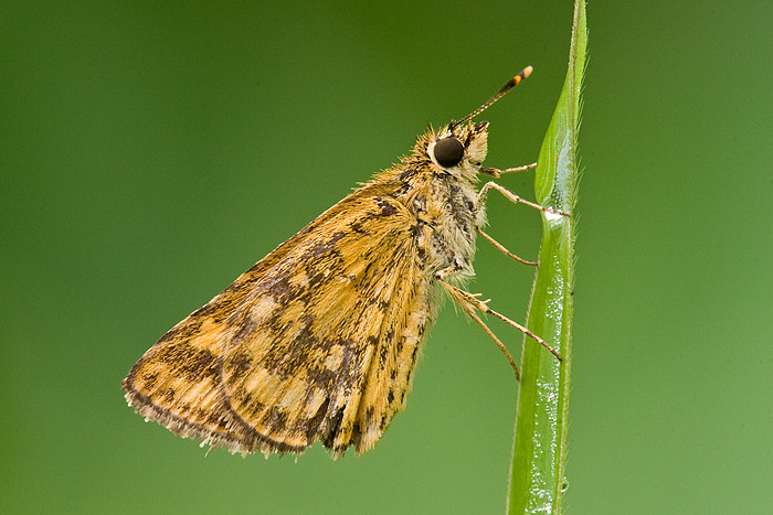 Keepers! Skippers