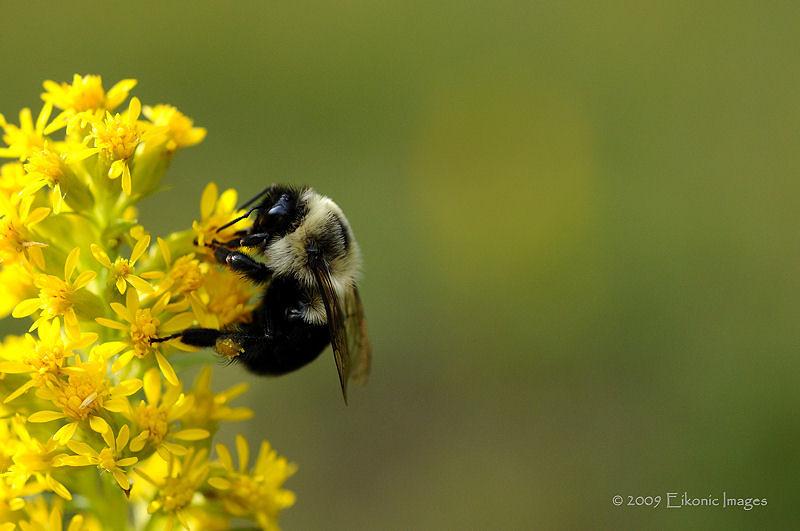A Spot of Honey