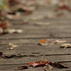 Fall leaves on a walkway.