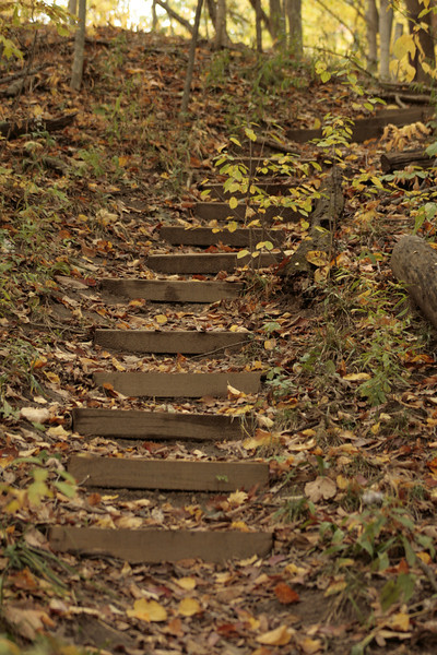 Beautiful stairway with nature all around it.