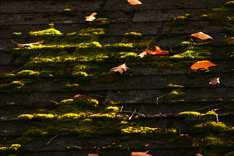 Moss growing on a rooftop at Pokagon State Park.