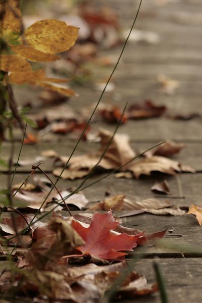 Fall leaves on a walkway.