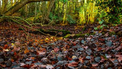 Leafy Mounds