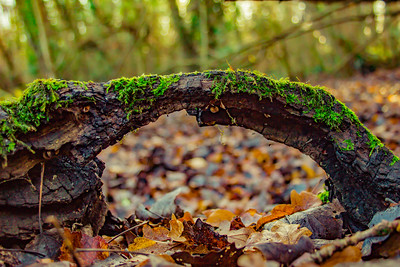 Arched Branch