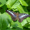 Rieman Gardens 7-13-2014 (108)